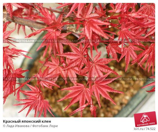 Купить «Красный японский клен», фото № 74522, снято 10 апреля 2007 г. (c) Лада Иванова / Фотобанк Лори
