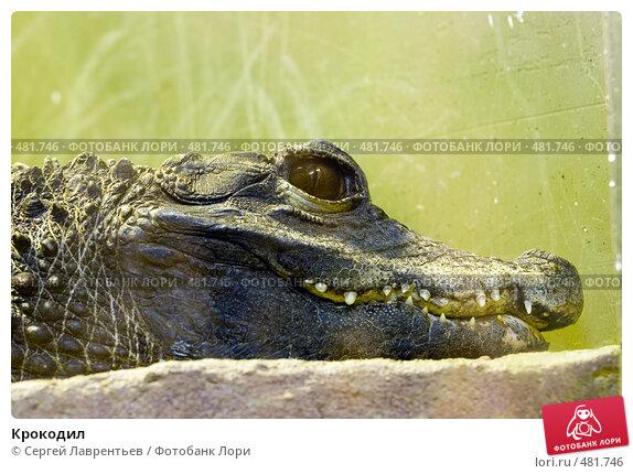 Крокодил, фото № 481746, снято 26 сентября 2008 г. (c) Сергей Лаврентьев / Фотобанк Лори