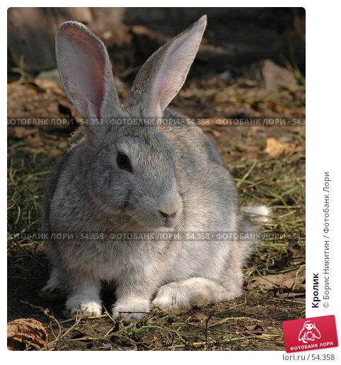Кролик, фото № 54358, снято 16 августа 2005 г. (c) Борис Никитин / Фотобанк Лори