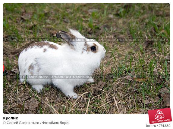 Кролик, фото № 274830, снято 12 апреля 2008 г. (c) Сергей Лаврентьев / Фотобанк Лори