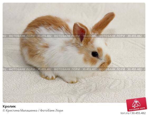 Кролик. Стоковое фото, фотограф Кристина Малашенко / Фотобанк Лори