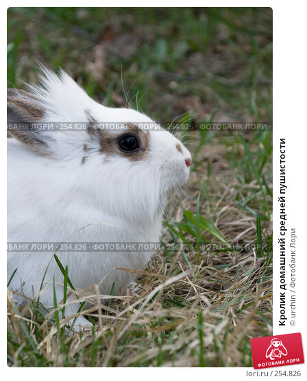 Купить «Кролик домашний средней пушистости», фото № 254826, снято 12 апреля 2008 г. (c) urchin / Фотобанк Лори