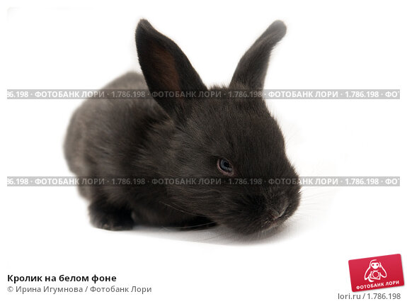 Купить «Кролик на белом фоне», фото № 1786198, снято 12 июня 2010 г. (c) Ирина Игумнова / Фотобанк Лори