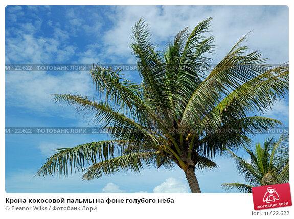 Крона кокосовой пальмы на фоне голубого неба, фото № 22622, снято 6 апреля 2007 г. (c) Eleanor Wilks / Фотобанк Лори