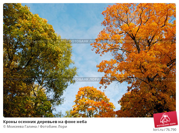 Кроны осенних деревьев на фоне неба, фото № 76790, снято 7 октября 2006 г. (c) Моисеева Галина / Фотобанк Лори