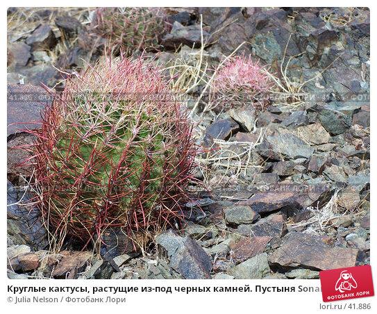 Круглые кактусы, растущие из-под черных камней. Пустыня Sonaran. США, фото № 41886, снято 9 февраля 2007 г. (c) Julia Nelson / Фотобанк Лори