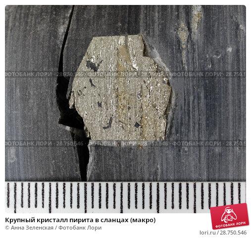 Купить «Крупный кристалл пирита в сланцах (макро)», фото № 28750546, снято 30 мая 2018 г. (c) Анна Зеленская / Фотобанк Лори