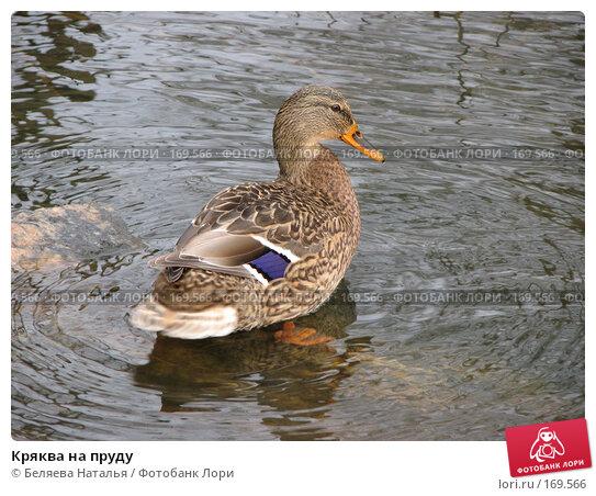 Кряква на пруду, фото № 169566, снято 20 октября 2007 г. (c) Беляева Наталья / Фотобанк Лори