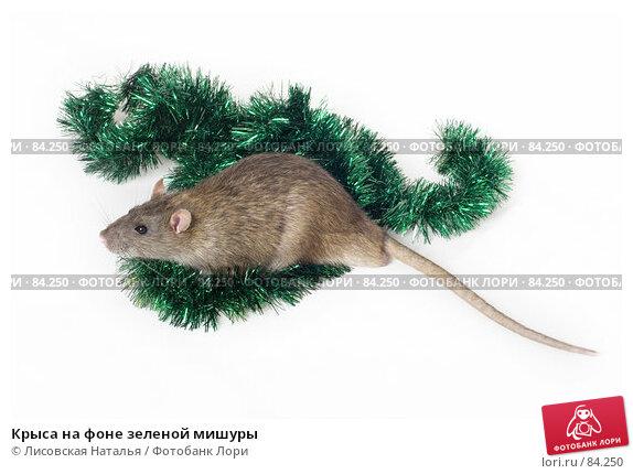 Крыса на фоне зеленой мишуры, фото № 84250, снято 15 сентября 2007 г. (c) Лисовская Наталья / Фотобанк Лори