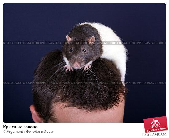 Крыса на голове, фото № 245370, снято 26 марта 2008 г. (c) Argument / Фотобанк Лори
