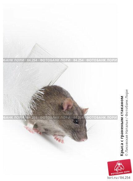 Крыса с граненым стаканом, фото № 84254, снято 15 сентября 2007 г. (c) Лисовская Наталья / Фотобанк Лори