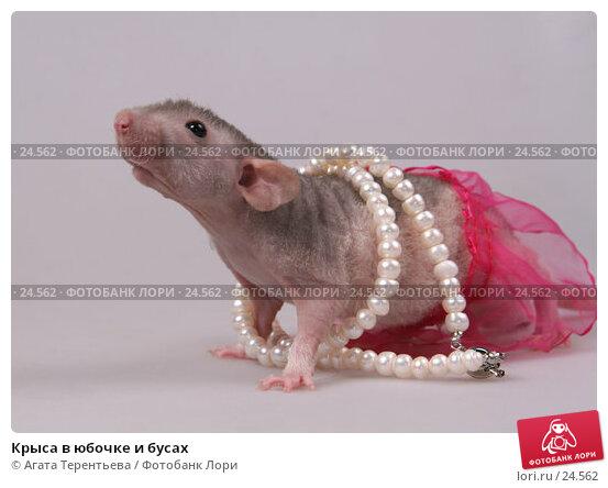 Крыса в юбочке и бусах, фото № 24562, снято 18 марта 2007 г. (c) Агата Терентьева / Фотобанк Лори