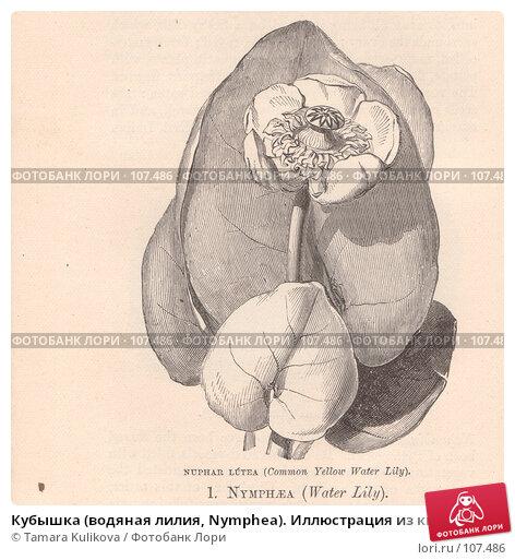 """Кубышка (водяная лилия, Nymphea). Иллюстрация из книги """"Полевые цветы"""", 1888 г., иллюстрация № 107486 (c) Tamara Kulikova / Фотобанк Лори"""