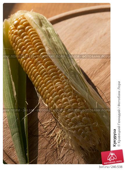 Кукуруза, фото № 240538, снято 23 мая 2017 г. (c) Кравецкий Геннадий / Фотобанк Лори