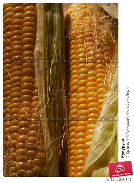 Кукуруза, фото № 240542, снято 25 июня 2017 г. (c) Кравецкий Геннадий / Фотобанк Лори