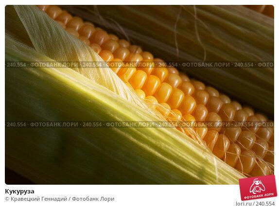 Кукуруза, фото № 240554, снято 29 марта 2017 г. (c) Кравецкий Геннадий / Фотобанк Лори