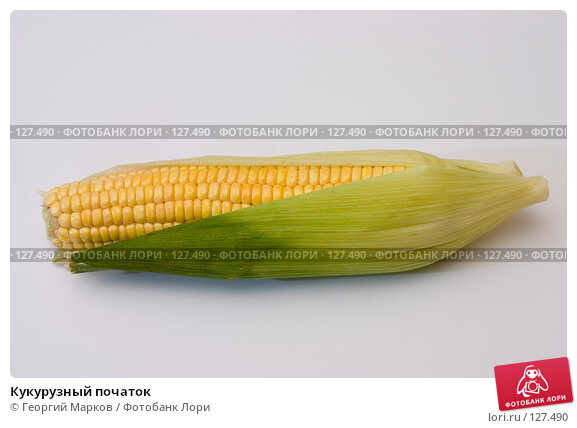 Кукурузный початок, фото № 127490, снято 5 сентября 2005 г. (c) Георгий Марков / Фотобанк Лори