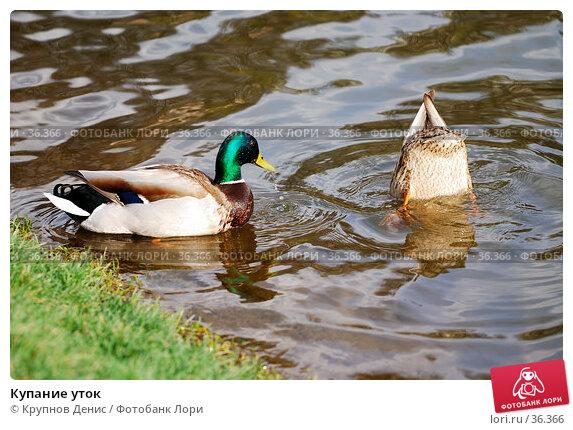 Купание уток, фото № 36366, снято 27 марта 2007 г. (c) Крупнов Денис / Фотобанк Лори