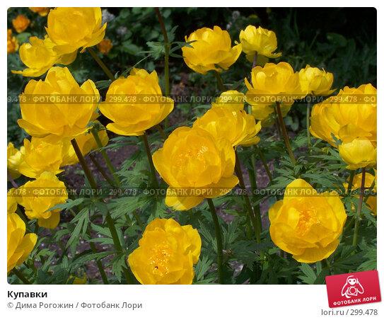 Купавки, фото № 299478, снято 25 мая 2008 г. (c) Дима Рогожин / Фотобанк Лори