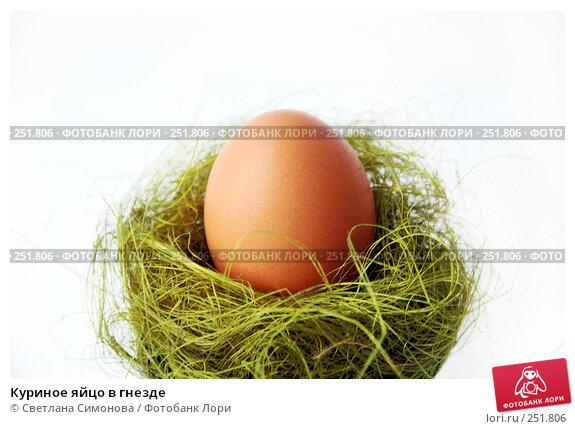 Куриное яйцо в гнезде, фото № 251806, снято 15 апреля 2008 г. (c) Светлана Симонова / Фотобанк Лори