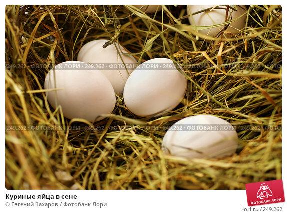 Куриные яйца в сене, эксклюзивное фото № 249262, снято 25 марта 2008 г. (c) Евгений Захаров / Фотобанк Лори