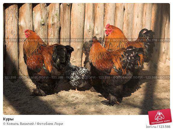 Купить «Куры», фото № 123598, снято 20 апреля 2007 г. (c) Коваль Василий / Фотобанк Лори