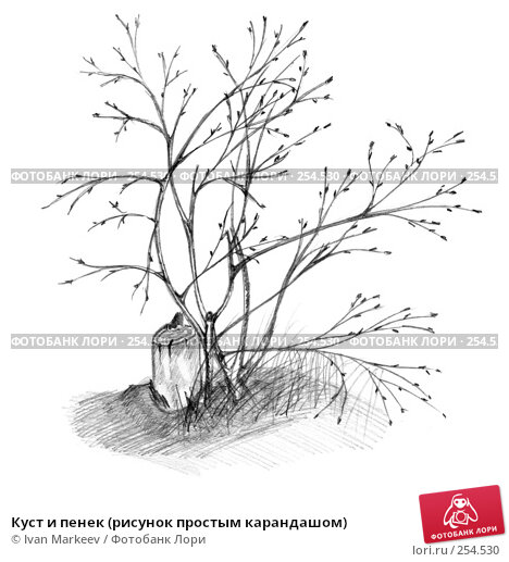Куст и пенек (рисунок простым карандашом), иллюстрация № 254530 (c) Василий Каргандюм / Фотобанк Лори