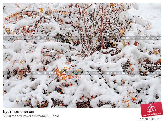 Куст под снегом, фото № 106118, снято 16 октября 2007 г. (c) Parmenov Pavel / Фотобанк Лори