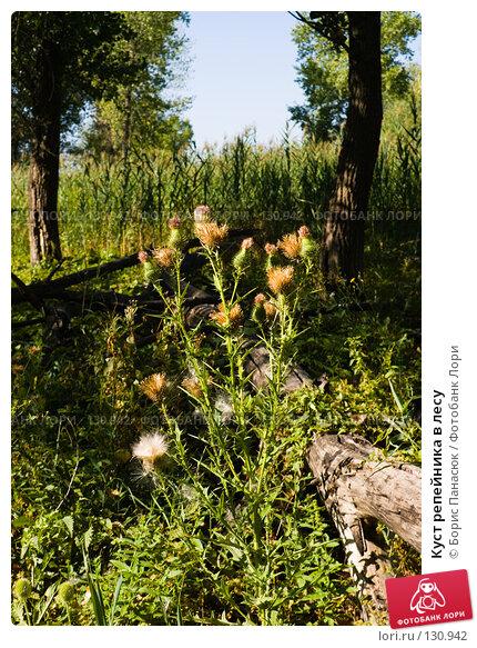 Купить «Куст репейника в лесу», фото № 130942, снято 17 августа 2007 г. (c) Борис Панасюк / Фотобанк Лори