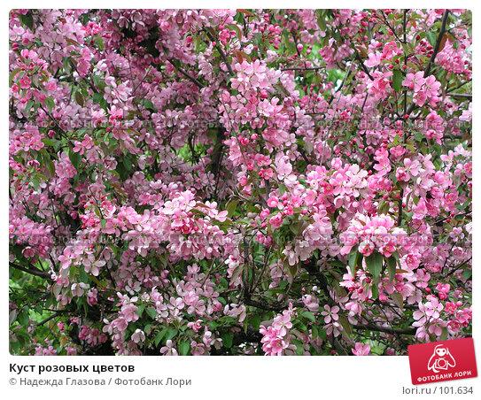 Купить «Куст розовых цветов», фото № 101634, снято 19 апреля 2018 г. (c) Надежда Глазова / Фотобанк Лори