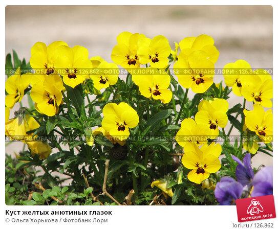 Куст желтых анютиных глазок, фото № 126862, снято 27 мая 2007 г. (c) Ольга Хорькова / Фотобанк Лори