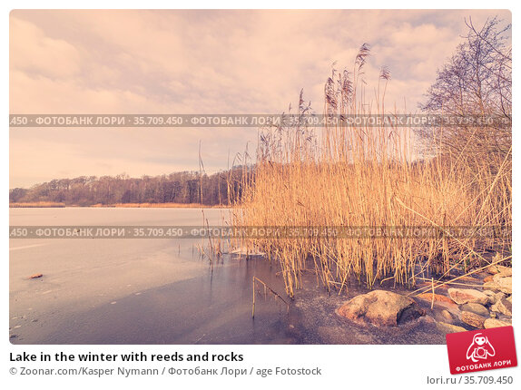 Lake in the winter with reeds and rocks. Стоковое фото, фотограф Zoonar.com/Kasper Nymann / age Fotostock / Фотобанк Лори