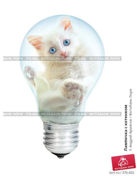 Купить «Лампочка с котенком», фото № 376602, снято 23 июля 2019 г. (c) Андрей Армягов / Фотобанк Лори