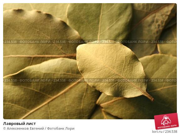 Лавровый лист, фото № 234538, снято 4 марта 2008 г. (c) Алексеенков Евгений / Фотобанк Лори