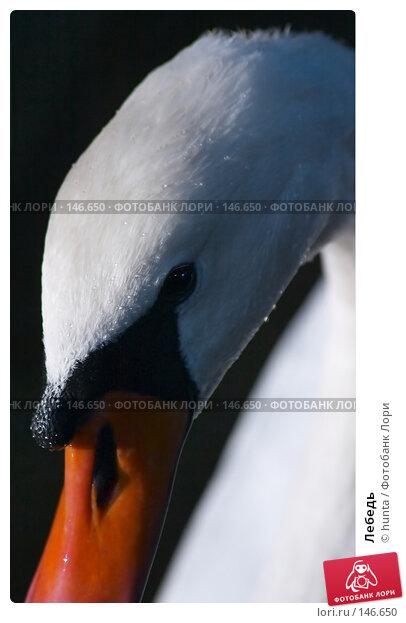 Лебедь, фото № 146650, снято 4 сентября 2004 г. (c) hunta / Фотобанк Лори