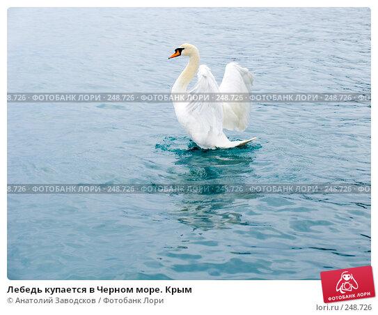 Лебедь купается в Черном море. Крым, фото № 248726, снято 11 мая 2006 г. (c) Анатолий Заводсков / Фотобанк Лори