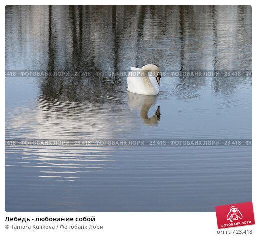 Лебедь - любование собой, фото № 23418, снято 14 марта 2007 г. (c) Tamara Kulikova / Фотобанк Лори