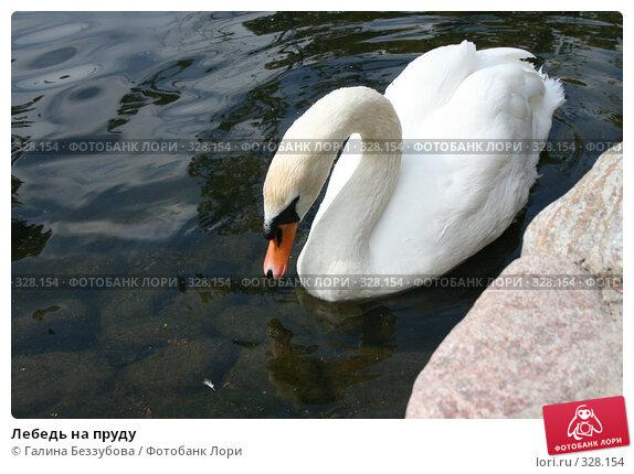 Лебедь на пруду, фото № 328154, снято 19 июня 2008 г. (c) Галина Беззубова / Фотобанк Лори