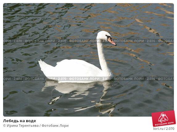 Лебедь на воде, эксклюзивное фото № 2070, снято 16 июня 2005 г. (c) Ирина Терентьева / Фотобанк Лори