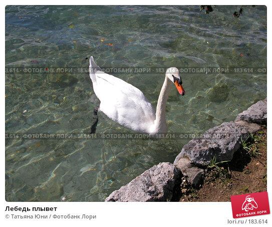 Лебедь плывет, фото № 183614, снято 8 октября 2003 г. (c) Татьяна Юни / Фотобанк Лори