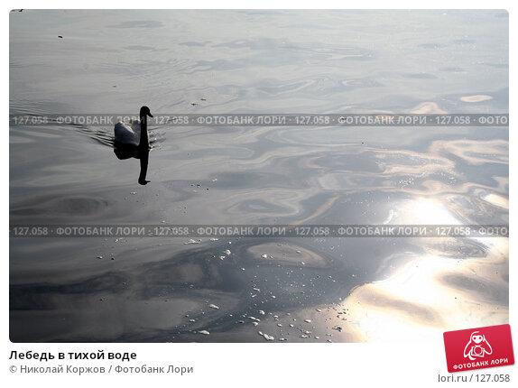 Лебедь в тихой воде, фото № 127058, снято 17 сентября 2006 г. (c) Николай Коржов / Фотобанк Лори