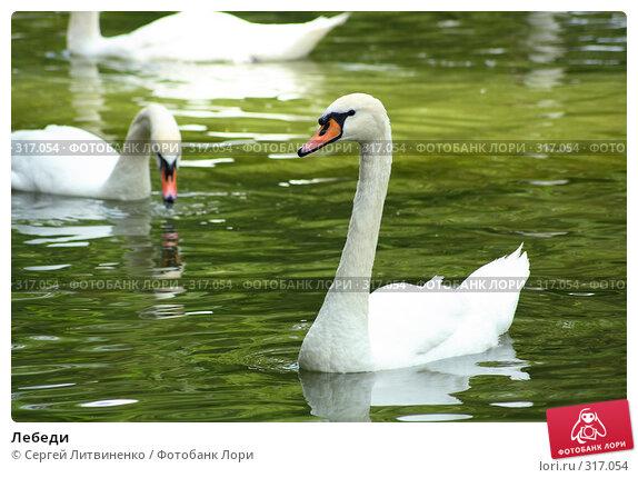 Лебеди, фото № 317054, снято 8 июня 2008 г. (c) Сергей Литвиненко / Фотобанк Лори