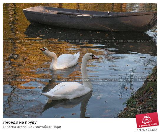 Купить «Лебеди на пруду», фото № 74666, снято 1 марта 2005 г. (c) Елена Яковенко / Фотобанк Лори