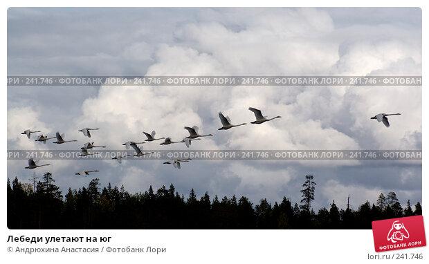 Лебеди улетают на юг, фото № 241746, снято 16 сентября 2007 г. (c) Андрюхина Анастасия / Фотобанк Лори