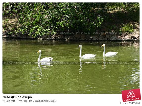 Лебединое озеро, фото № 317046, снято 8 июня 2008 г. (c) Сергей Литвиненко / Фотобанк Лори