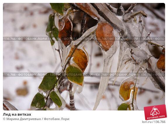 Купить «Лед на ветках», фото № 136766, снято 6 ноября 2006 г. (c) Марина Дмитриевых / Фотобанк Лори