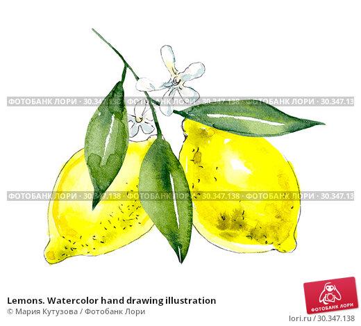Купить «Lemons. Watercolor hand drawing illustration», иллюстрация № 30347138 (c) Мария Кутузова / Фотобанк Лори