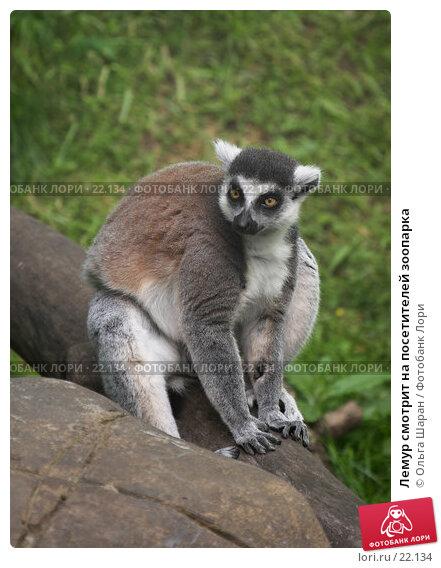 Купить «Лемур смотрит на посетителей зоопарка», фото № 22134, снято 25 июля 2006 г. (c) Ольга Шаран / Фотобанк Лори