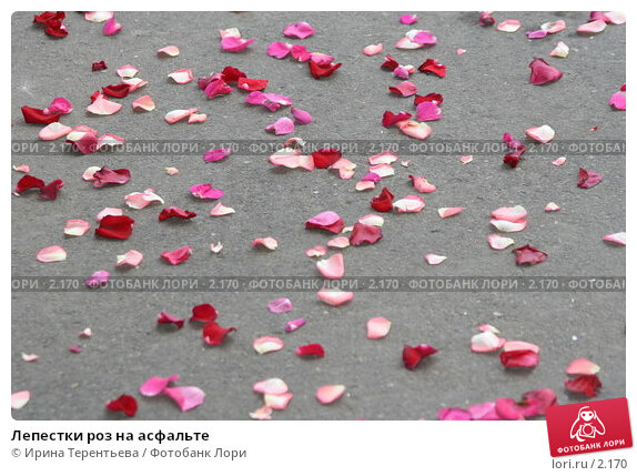 Лепестки роз на асфальте, эксклюзивное фото № 2170, снято 29 июля 2005 г. (c) Ирина Терентьева / Фотобанк Лори