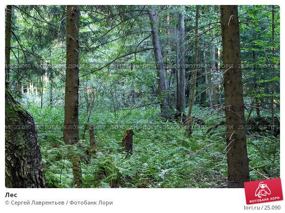 Лес, фото № 25090, снято 27 апреля 2017 г. (c) Сергей Лаврентьев / Фотобанк Лори